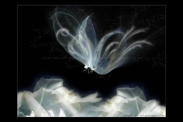 farfallaeterea