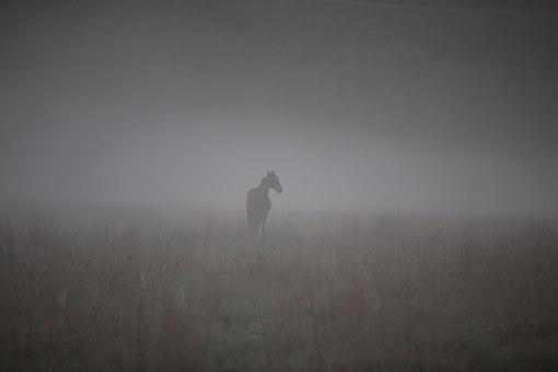 slacciassero horse-623536__340