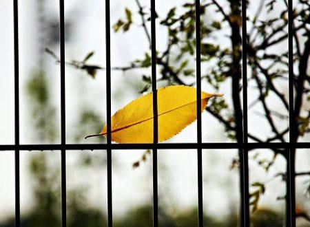 Mi sono nascosta sotto un cumulo di foglie d'autunno dicono che presto la primavera tornerà  Dicono [Yelena b.]
