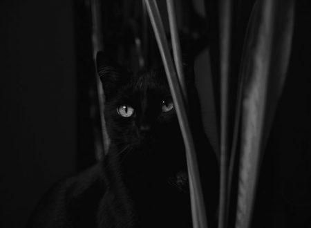 Di sogni, amori e gatti